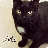Adopt A Pet :: Allie - Lancaster, PA