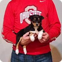 Adopt A Pet :: Penelope - New Philadelphia, OH