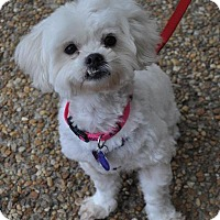 Adopt A Pet :: Lizzie - Atlanta, GA