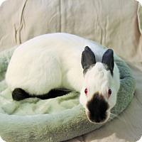 Adopt A Pet :: Twig - Hillside, NJ