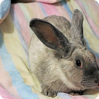 Adopt A Pet :: Anastasia - Hillside, NJ