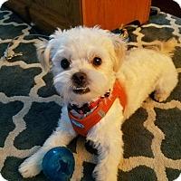 Adopt A Pet :: Ernest - Lodi, CA
