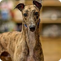 Adopt A Pet :: Webster - Aurora, IN