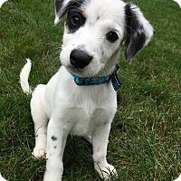 Adopt A Pet :: Noah - Sugar Grove, IL