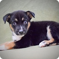Adopt A Pet :: Damon - Sacramento, CA