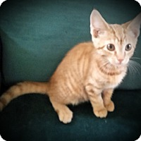 Adopt A Pet :: Redman - Fairborn, OH