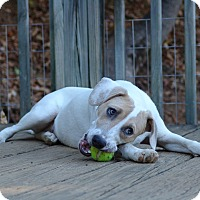 Adopt A Pet :: Barbie -  $200 - Staunton, VA