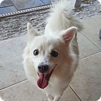 Adopt A Pet :: Molly of Cape Coral, FL - Bradenton, FL