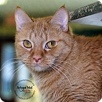 Adopt A Pet :: Max - Lyons, NY