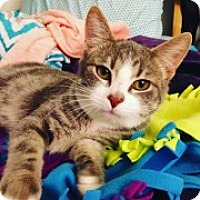 Adopt A Pet :: Harmony - McHenry, IL