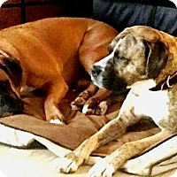 Adopt A Pet :: Buddy-1-22-17 New Pic - Turnersville, NJ