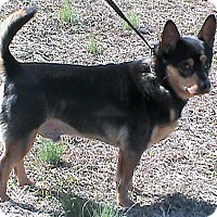 Adopt A Pet :: Francois - Maynardville, TN