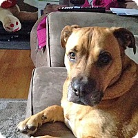 Adopt A Pet :: Rosie - in Maine - kennebunkport, ME