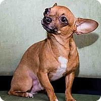 Adopt A Pet :: Tyson - Toronto, ON