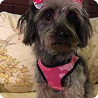 Adopt A Pet :: Mindy ~ Adoption Pending - Youngstown, OH