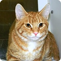 Adopt A Pet :: Blitzen - Cheyenne, WY