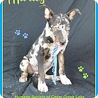 Adopt A Pet :: Marley - Plano, TX