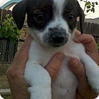 Adopt A Pet :: Mickey - Bakersfield, CA