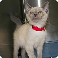 Adopt A Pet :: Jackson - Dover, OH