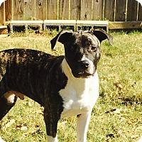 Adopt A Pet :: Ziggy - Hatifeld, PA