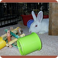 Adopt A Pet :: Bonnie - Williston, FL