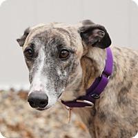 Adopt A Pet :: Ripple - Ware, MA