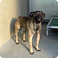 Adopt A Pet :: Doug - Anaheim, CA
