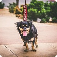 Adopt A Pet :: Theo - Las Vegas, NV