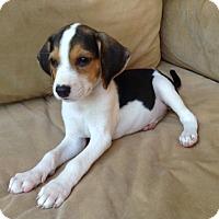 Adopt A Pet :: Bonnie - Richmond, VA