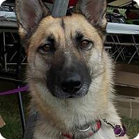 Adopt A Pet :: Keela - Dripping Springs, TX