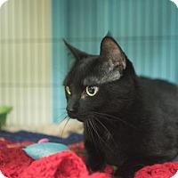 Adopt A Pet :: Manny - Toronto, ON