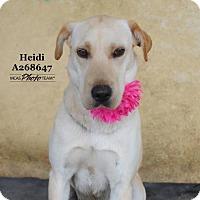 Adopt A Pet :: HEIDI - Conroe, TX