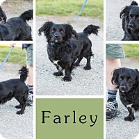 Adopt A Pet :: Farley - Liberty, IN