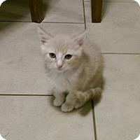 Adopt A Pet :: Nugget - Jefferson, NC