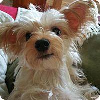 Adopt A Pet :: FI FI - Jackson, NJ