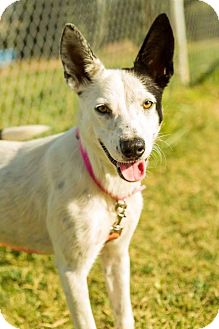 Border Collie Mix Dog for adoption in Texico, Illinois - Mattie