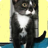 Adopt A Pet :: Dash - Bedford, VA
