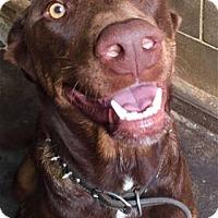 Adopt A Pet :: Sammy - Kailua-Kona, HI