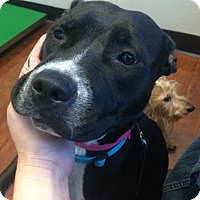 Adopt A Pet :: Ellie-URGENT! - Oak Ridge, NJ