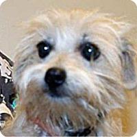 Adopt A Pet :: Chunk - Wildomar, CA