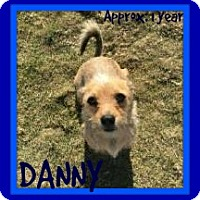 Adopt A Pet :: DANNY - Middletown, CT