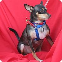 Adopt A Pet :: Rickee - Umatilla, FL