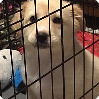 Adopt A Pet :: Royce - Attalla, AL