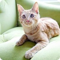 Adopt A Pet :: Mac - Acme, MI