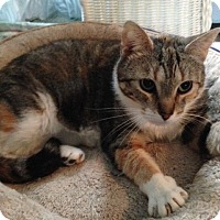 Adopt A Pet :: Claire - Oyster Bay, NY