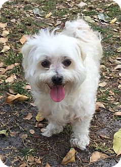 Dog Adoption Boca Raton Florida