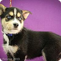 Adopt A Pet :: Snowman - Broomfield, CO