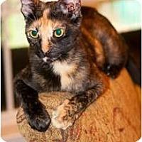 Adopt A Pet :: Naterie - Mobile, AL