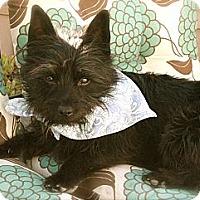 Adopt A Pet :: MAXWELL - Mission Viejo, CA