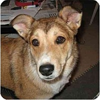 Adopt A Pet :: Bonnie - Golden Valley, AZ
